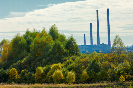 yellow trees: autumn yellow trees CHP combined heat and power,