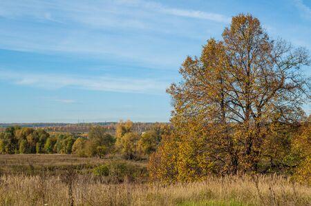yellow trees: autumn green grass yellow trees