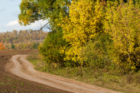yellow trees: autumn yellow trees country road