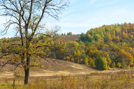 red mountain: Autumn, yellow leaves trees in the hills foothills Stock Photo