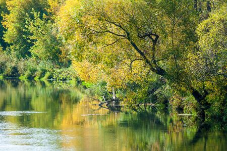 leaned: Fall River, trees dressed in yellow leaves leaned over the water. Small island in the middle of the river