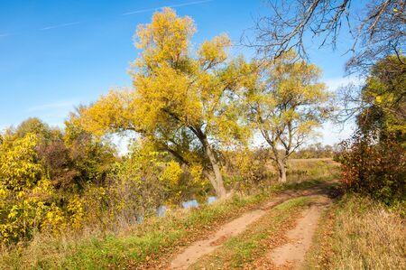 Herbst Bäume mit gelben Blättern, die Straße im Herbstwald