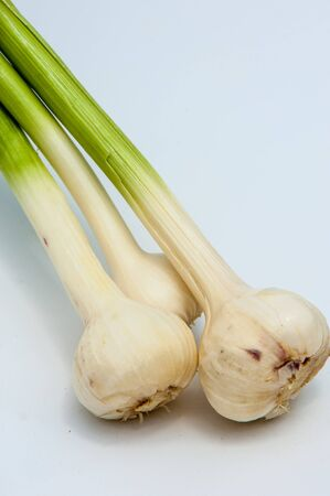 bulb and stem vegetables: garlic isolated on white background. a strong-smelling pungent-tasting bulb, used as a flavoring in cooking and in herbal medicine.