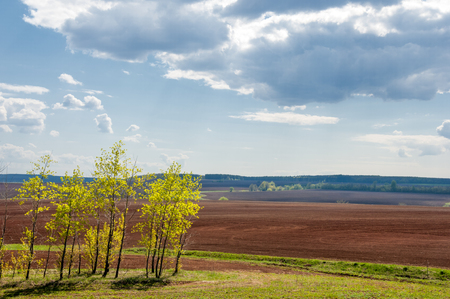 plough land: Field plowed, sown cereals. Plowed field in spring day. Black soil plowed field. Plowed field in the blue sky Stock Photo