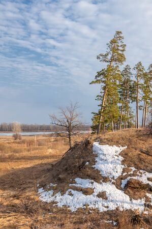 springtide: Pine forest in spring.  the season of spring. spring, springtime, springtide, prime. the season after winter and before summer, in which vegetation begins to appear,