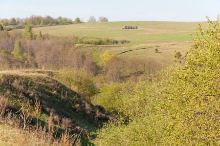 soil erosion: Spring ravine tree. Soil erosion in a spring season. Trees along a sunny ravine in spring Stock Photo