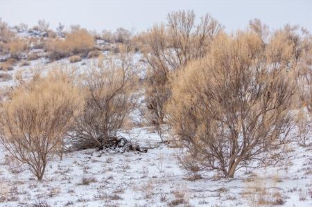 alpine zone: 2014 02 02 Kazakhstan, Almaty region, Bakanas, steppes winter travel by car