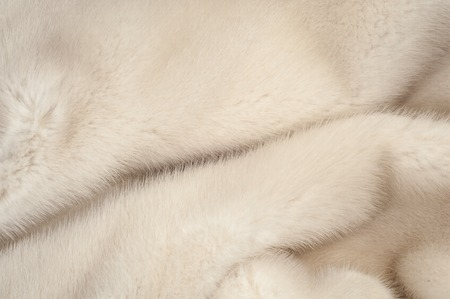 mink: Texture, fur white (blue) mink. Mink fur. mink coat. photo studio. Stock Photo