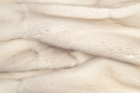 mink: Texture, pelliccia bianca (blu) di visone. Pelliccia di visone. cappotto di visone. studio fotografico. Archivio Fotografico