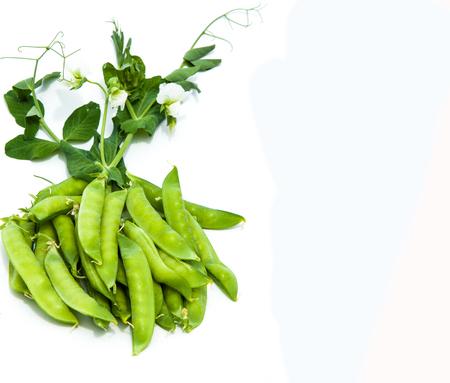 bush to grow up: green pea. bush. Green peas in the pod. peas growing on the farm. closeup of fresh ripe peas growing on the farm.