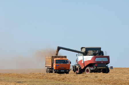 tractor trailer: 07,08,2014 Russian Tatarstan. peas combine. Harvester combine pouring peas in the tractor trailer on sunny summer day.