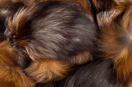 cunning: Texture, background. Fur Fox. a carnivorous mammal of the dog family with a pointed muzzle and bushy tail, proverbial for its cunning. Stock Photo