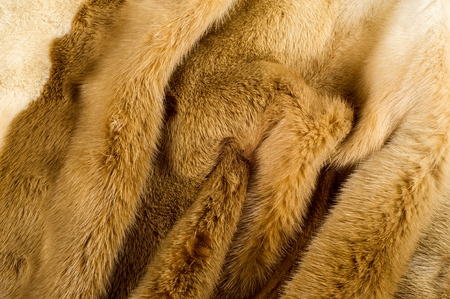 carnivore: Texture, background. mink fur. Mink coat. Gold color mink fur. a small, semiaquatic, stoatlike carnivore native to North America and Eurasia. The American mink is widely farmed for its fur.