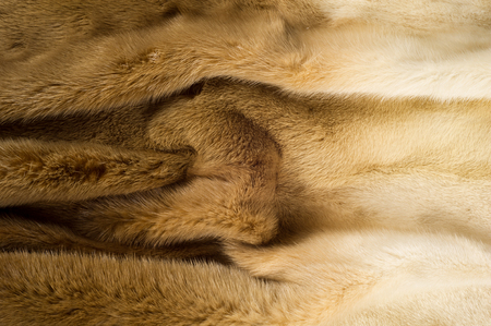mink: Texture, background. mink fur. Mink coat. Gold color mink fur. a small, semiaquatic, stoatlike carnivore native to North America and Eurasia. The American mink is widely farmed for its fur.
