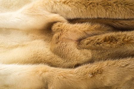 visone: Trama, sfondo. pelliccia di visone. Cappotto di visone. L'oro pelliccia color visone. un piccolo, semiacquatici, carnivoro stoatlike originaria del Nord America e dell'Eurasia. Il visone americano è ampiamente coltivato per la sua pelliccia.
