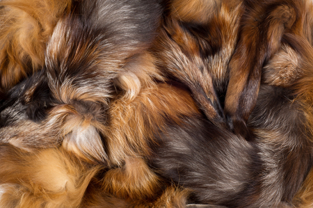 Texture, background. Fur Fox. a carnivorous mammal of the dog family with a pointed muzzle and bushy tail, proverbial for its cunning. Stock Photo