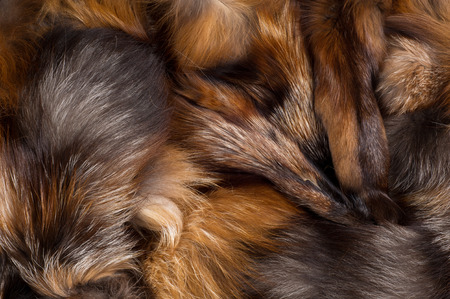 bushy: Texture, background. Fur Fox. a carnivorous mammal of the dog family with a pointed muzzle and bushy tail, proverbial for its cunning. Stock Photo