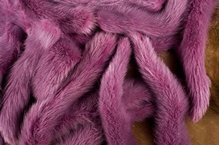 visone: Trama, sfondo. Visone pelliccia multicolore. code di visone Archivio Fotografico