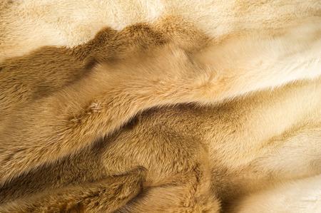 visone: Trama, sfondo. pelliccia di visone. Cappotto di visone. L'oro pelliccia color visone. un piccolo, semiacquatici, carnivoro stoatlike originaria del Nord America e dell'Eurasia. Il visone americano � ampiamente coltivato per la sua pelliccia.