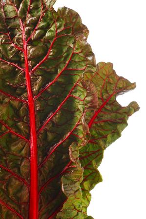 remolacha: Beet leaf texture.  Leaf beet vitamin pantry. Ingredient for salad