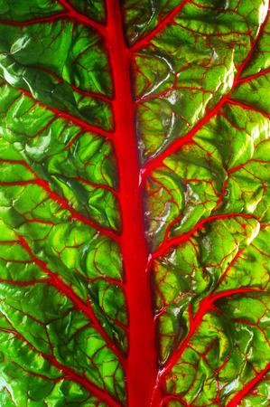 remolacha: Remolacha textura de la hoja. Hoja de vitamina remolacha despensa. Ingrediente para la ensalada Foto de archivo