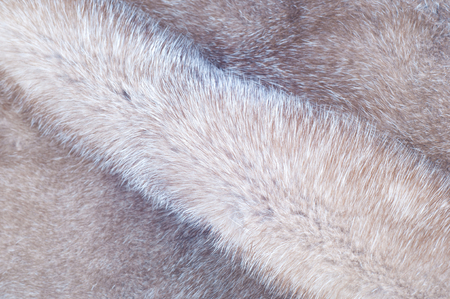 mink: Mink fur texture. Mink coat photographed in the studio