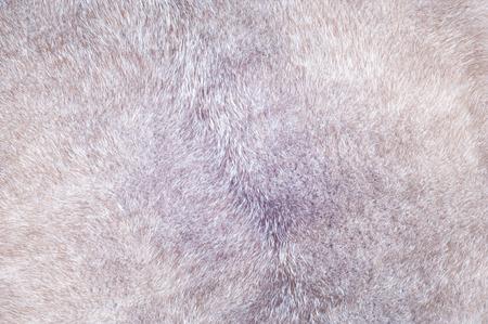 visone: Mink fur texture. Mink coat photographed in the studio