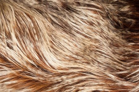 yak: yak fur. texture. Photographed in the studio Stock Photo