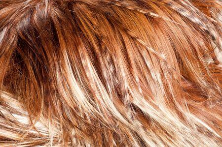 yak fur. texture. Photographed in the studio Stock Photo