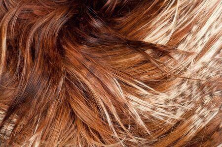 tibetian: yak fur. texture. Photographed in the studio Stock Photo