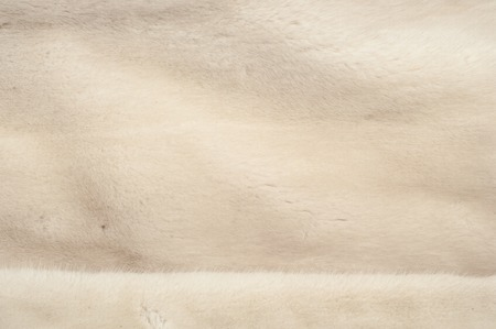 visone: Texture, fur white (blue) mink. Mink fur. mink coat. photo studio. Archivio Fotografico
