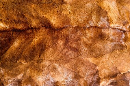 visone: struttura, sfondo. visone marrone