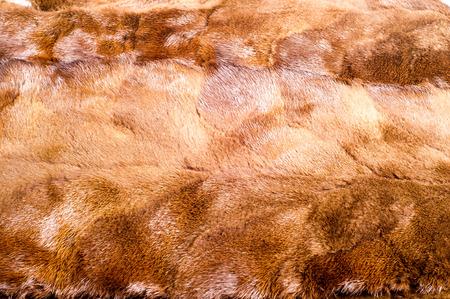 mink: texture, background. mink brown