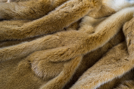 Texture, background. Mink fur. he short, fine, soft hair of certain animals. carnivorous mammals of the family Mustelidae Stock Photo