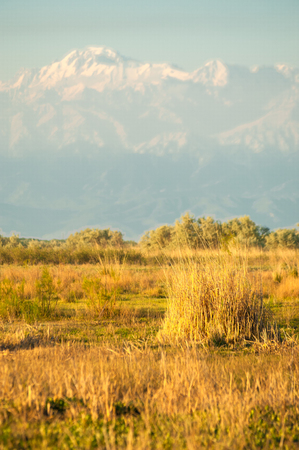 steppe in early summer Stock Photo