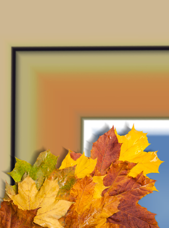 field maple: autumn maple leaves red yellow green. free field for the text in the image Stock Photo