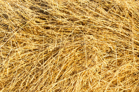 beveled: Texture, background. Straw from wheat beveled