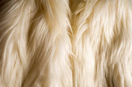 tibetian: texture, background. Fur white yak. a large domesticated wild ox with shaggy hair, humped shoulders, and large horns, used in Tibet as a pack animal and for its milk, meat, and hide. Stock Photo