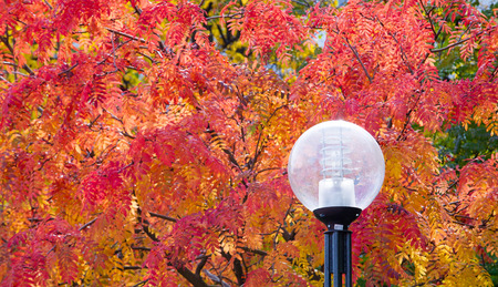 sharpness: The sharpness of the pictures on the street lights. Texture, pattern, background. Street lamp tree autumn red rowan
