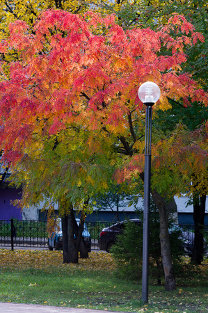 The sharpness of the pictures on the street lights. Texture, pattern, background. Street lamp tree autumn red rowan