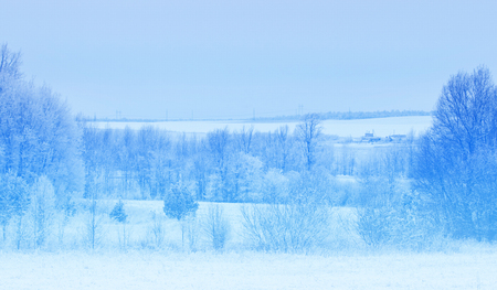covered fields: Winter landscape. Frost frost on the trees. Extreme cold. hoarfrost. a grayish-white crystalline deposit of frozen water vapor formed in clear still weather on vegetation