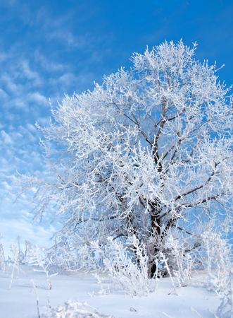 invierno, invierno de la marea, en tiempo de invierno, hibernación, él estación más fría del año, en el hemisferio norte de diciembre a febrero y en el hemisferio sur, de junio a agosto.