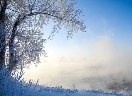 placidity: Winter landscape. Trees and bushes with hoarfrost. The water in the river floating mist. cold season. a grayish-white crystalline deposit of frozen water vapor formed in clear still weather on vegetation