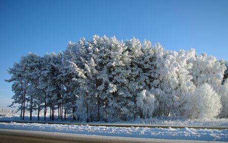 snowy field: winter