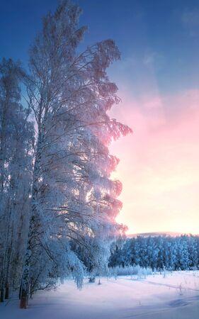 vapore acqueo: Paesaggio invernale. Gelo di gelo sugli alberi. Evapora l'acqua. Cielo blu. Giorno soleggiato. Aria opaca satura di vapore acqueo, piena di luce brillante del sole