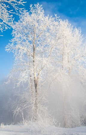 vapore acqueo: Winter landscape. Frost frost on the trees. Mist evaporation of water. Blue sky. Sunny day. Opaque air saturated with water vapor, filled with bright light of the sun