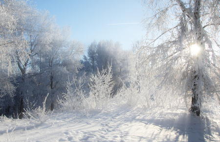 very cold: Winter landscape. Winter season. Snow on the ground. Very cold. frost on the branches of trees. The sun Stock Photo