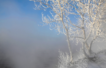 natural ice pastime: Winter landscape. Trees and bushes with hoarfrost. The water in the river floating mist. cold season. a grayish-white crystalline deposit of frozen water vapor formed in clear still weather on vegetation