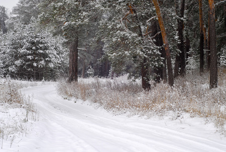 precipitación: heladas de invierno árboles de la nieve helada. La época más fría del año, el frío fuerte precipitación en forma de copos blancos, representa a cristales de hielo, invierno, invierno de la marea, en tiempo de invierno