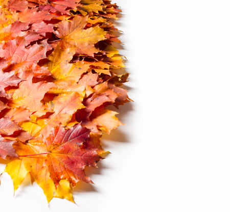 Texture, background. Yellow autumn leaves. Autumn maple leaf. Photographed in the studio